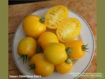 Früchte der Zwergtomate Golden Heart