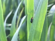 Ein Tierchen im Weizen ;)