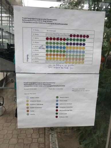 Versuchsplan im Gewächshaus der Fachhochschule Erfurt